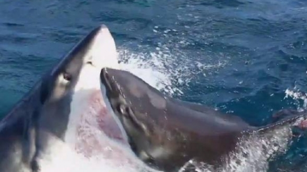 ccedil-far-euml-ndodh-kur-p-euml-rplasen-dy-peshkaqen-euml-video_hd